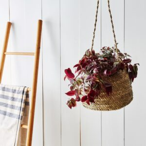Hanging Basket