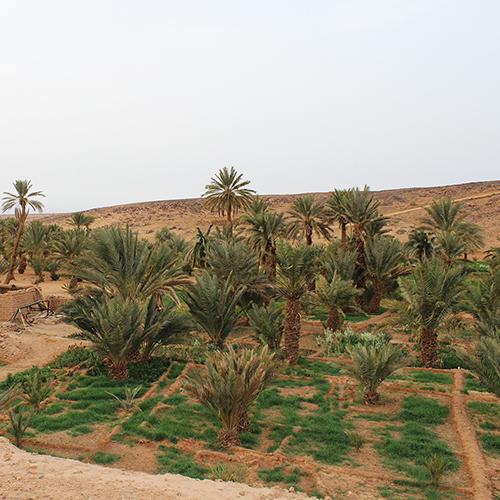 Marrakech Oasis